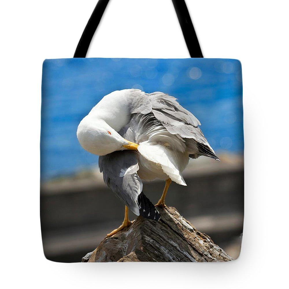 Animal Tote Bag featuring the photograph Seagull On A Rock by Antonio Scarpi