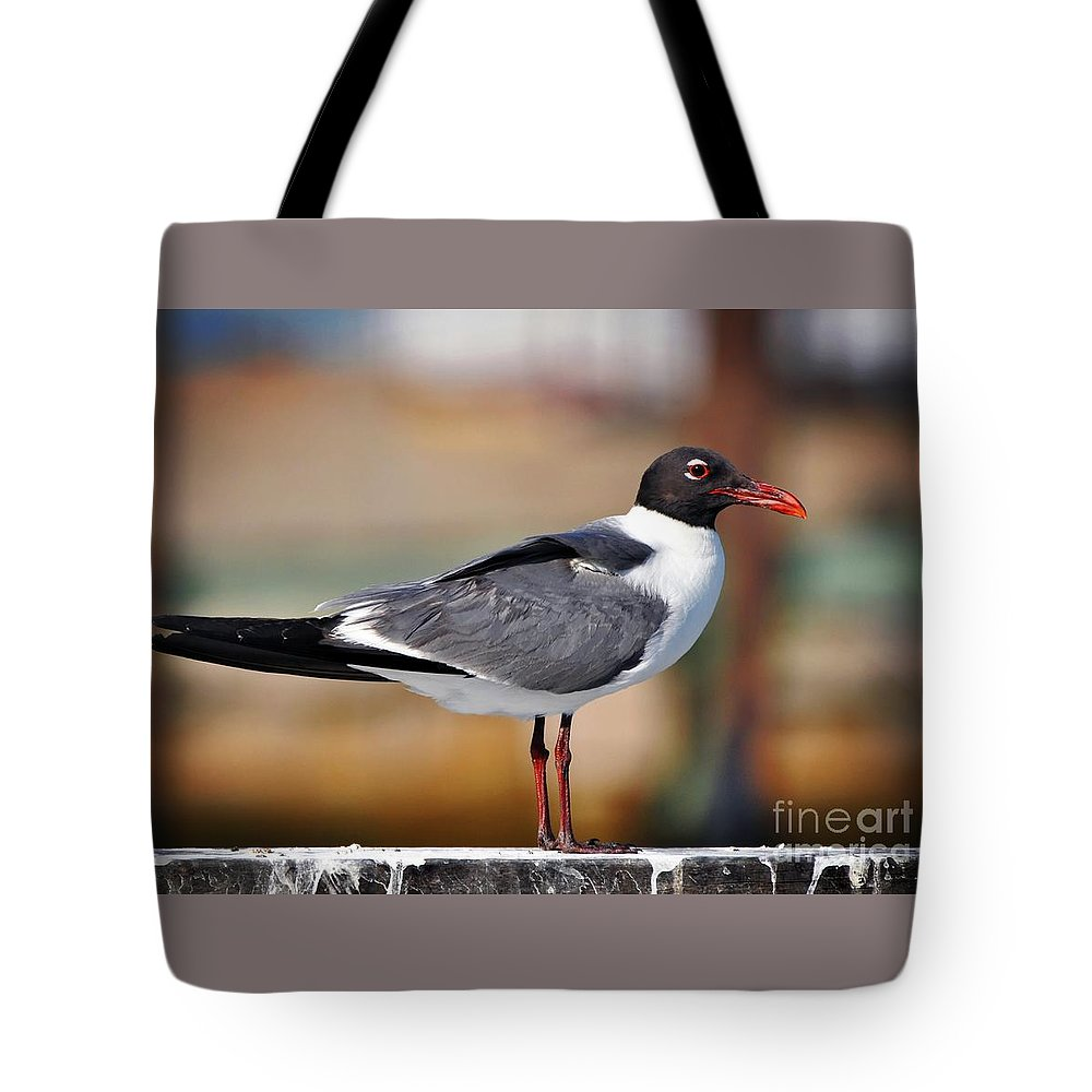 Seagull Tote Bag featuring the photograph Seagull by Savannah Gibbs