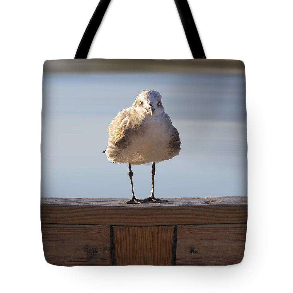 Seagull Tote Bag featuring the photograph Seagull With An Attitude by Mike McGlothlen