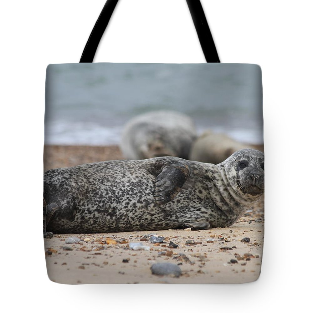 Seal Tote Bag featuring the photograph Seal Pup On Beach by Gordon Auld