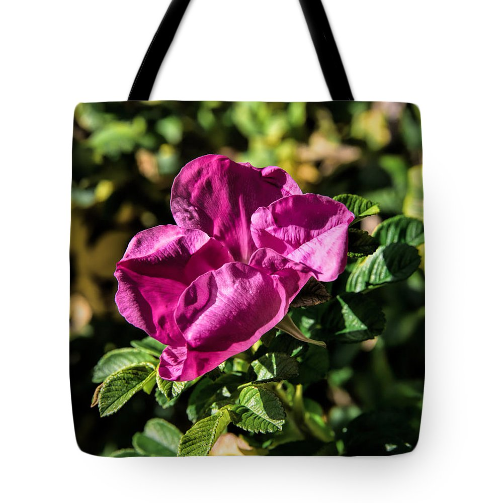 Rose Tote Bag featuring the photograph Seasons Last Rose by Leif Sohlman