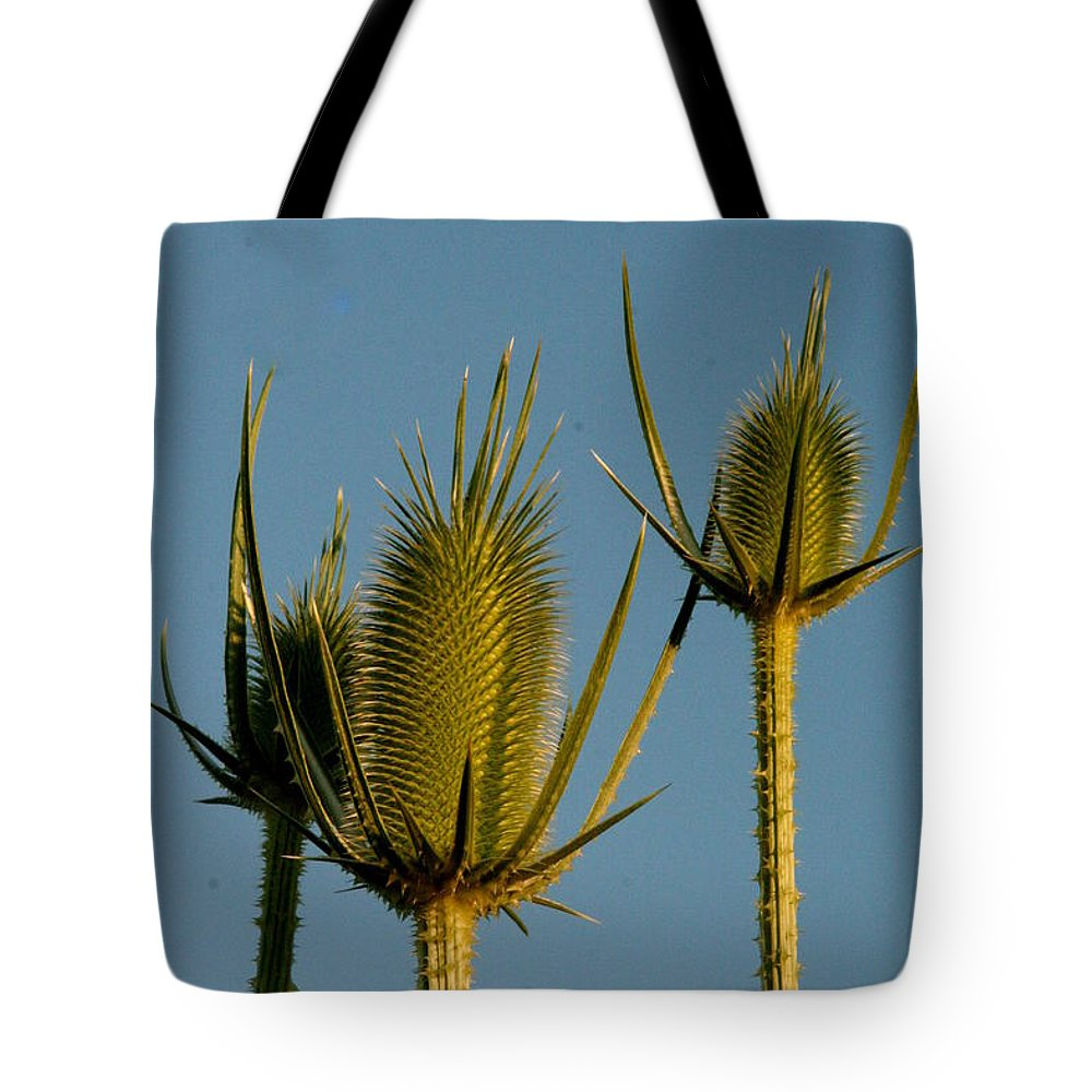 Seed Head Tote Bag featuring the photograph Seed Heads Reach For The Sky by Laurel Talabere