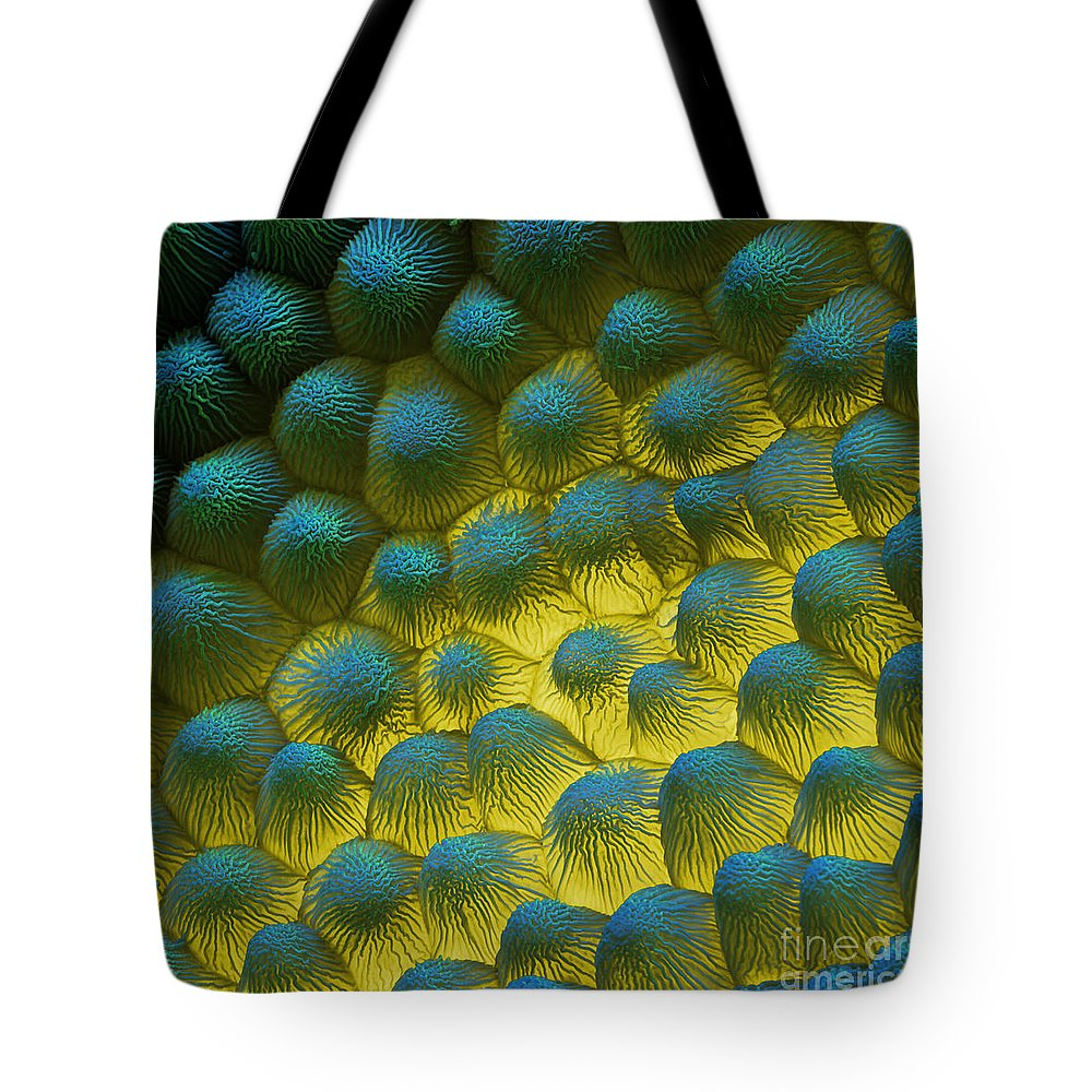 Sem Tote Bag featuring the photograph Sem Of Rapeseed Flower by Eye of Science