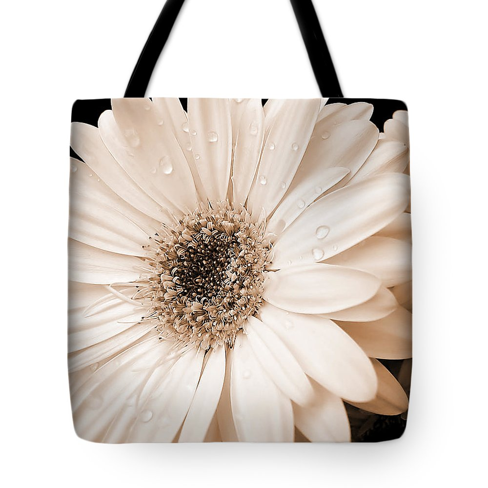 Sepia gerber daisy flowers tote bag for sale by jennie marie schell daisy tote bag featuring the photograph sepia gerber daisy flowers by jennie marie schell izmirmasajfo Images