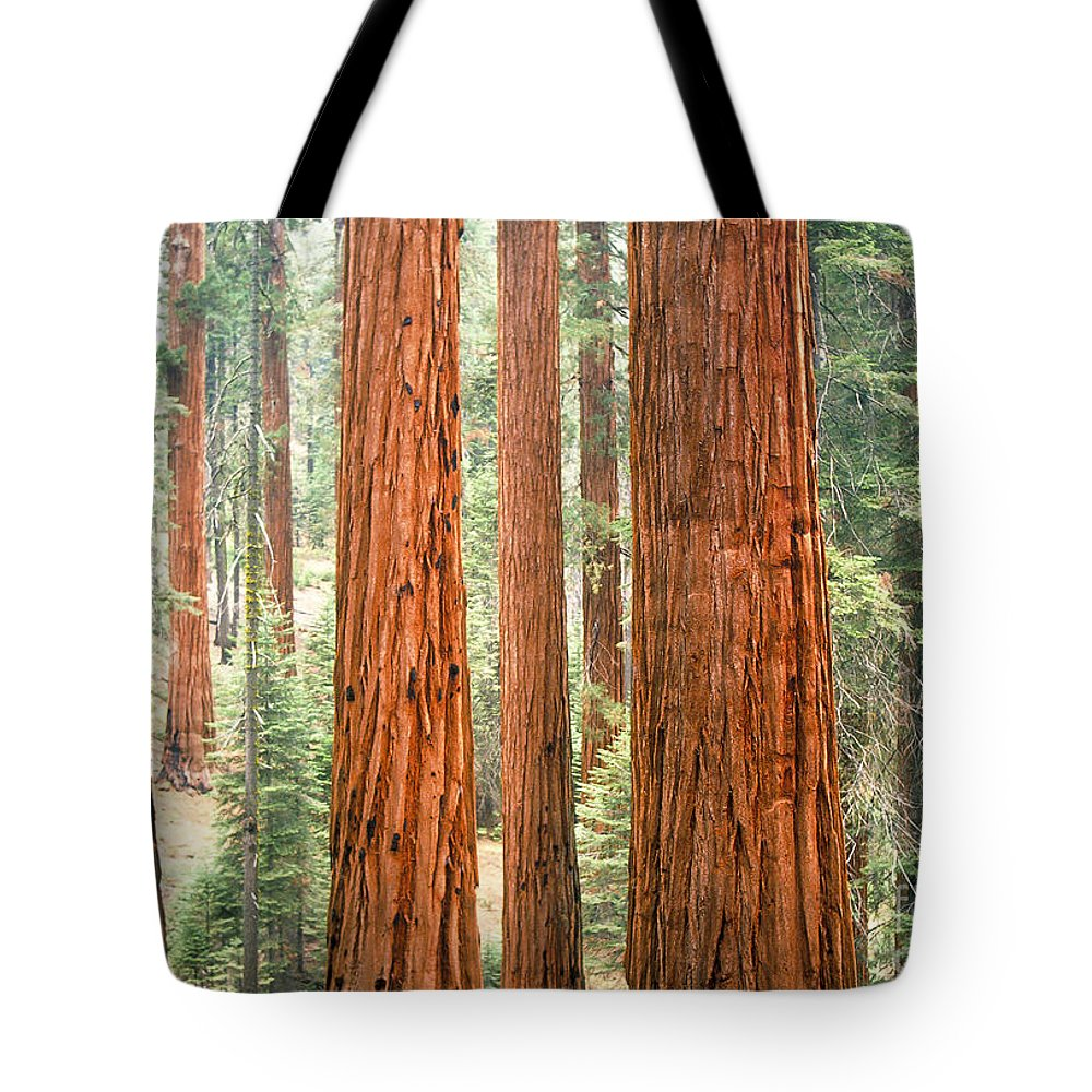 Sequoia National Park Tote Bag featuring the photograph Sequoia by Chuck Spang