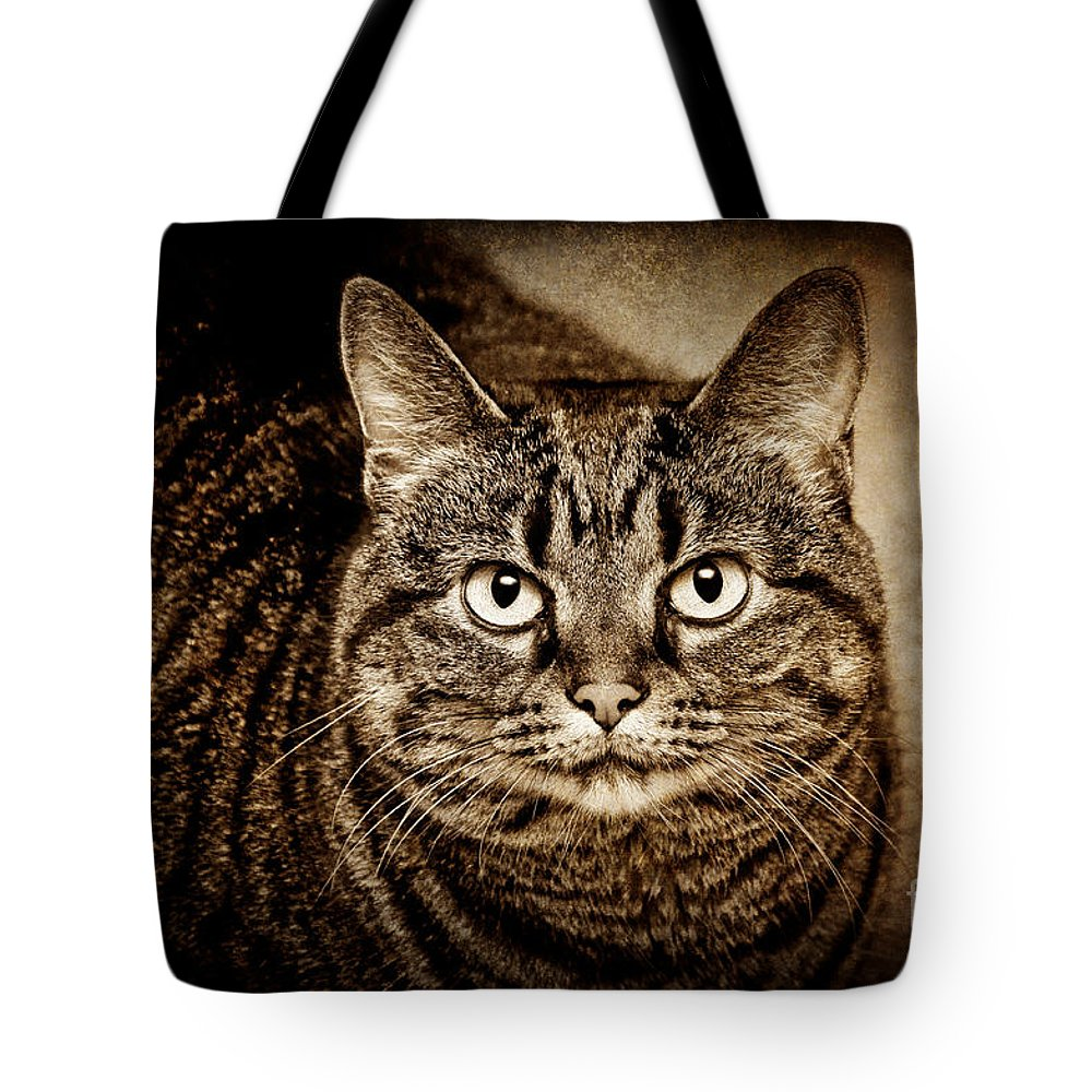 Kitten Tote Bag featuring the photograph Serious Tabby Cat by Andee Design