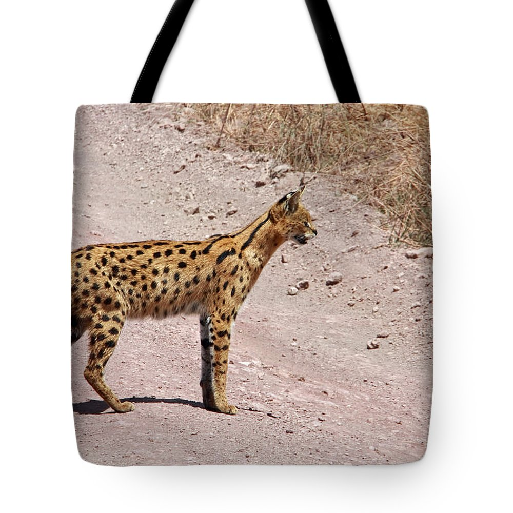 Serval Cat Tote Bag featuring the photograph Serval Cat by Aidan Moran