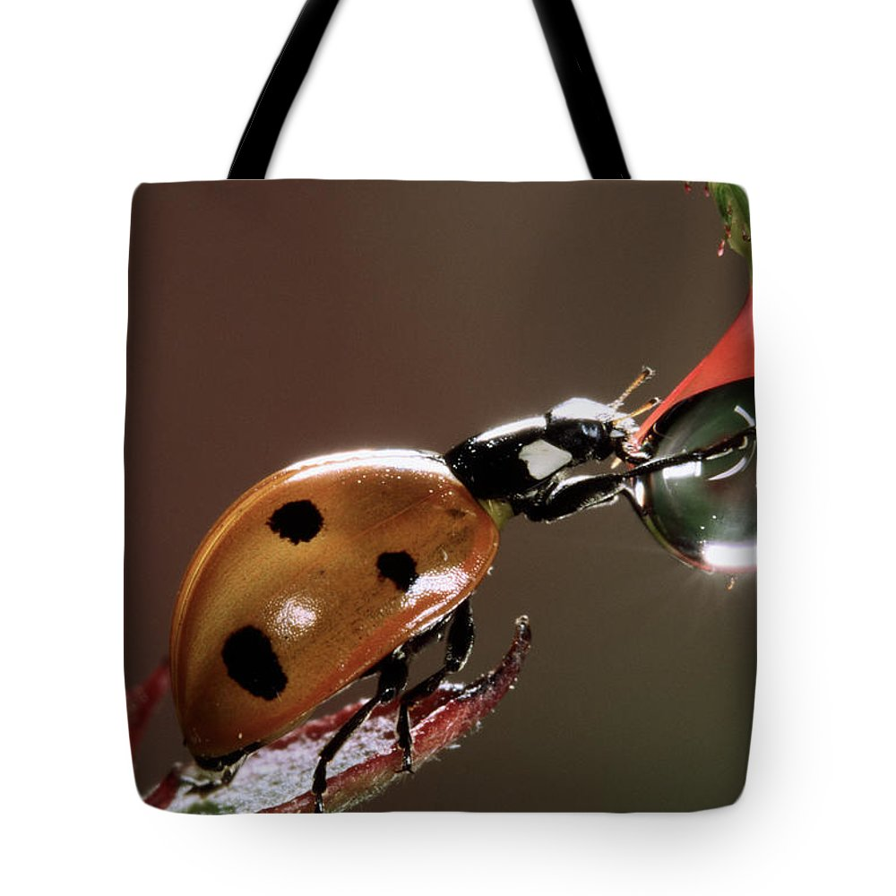 Fn Tote Bag featuring the photograph Seven-spotted Ladybird Coccinella by Jef Meul