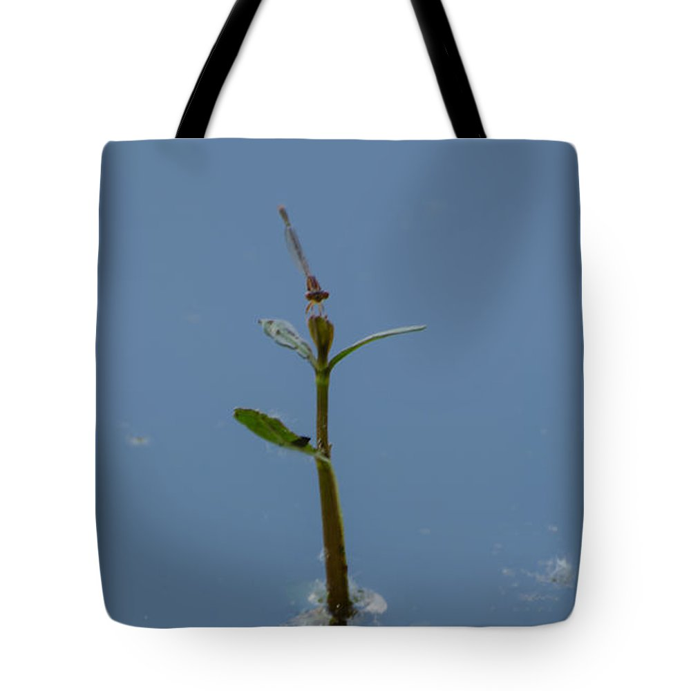 Dragonfly Tote Bag featuring the photograph Shadow In The Water by Donna Brown
