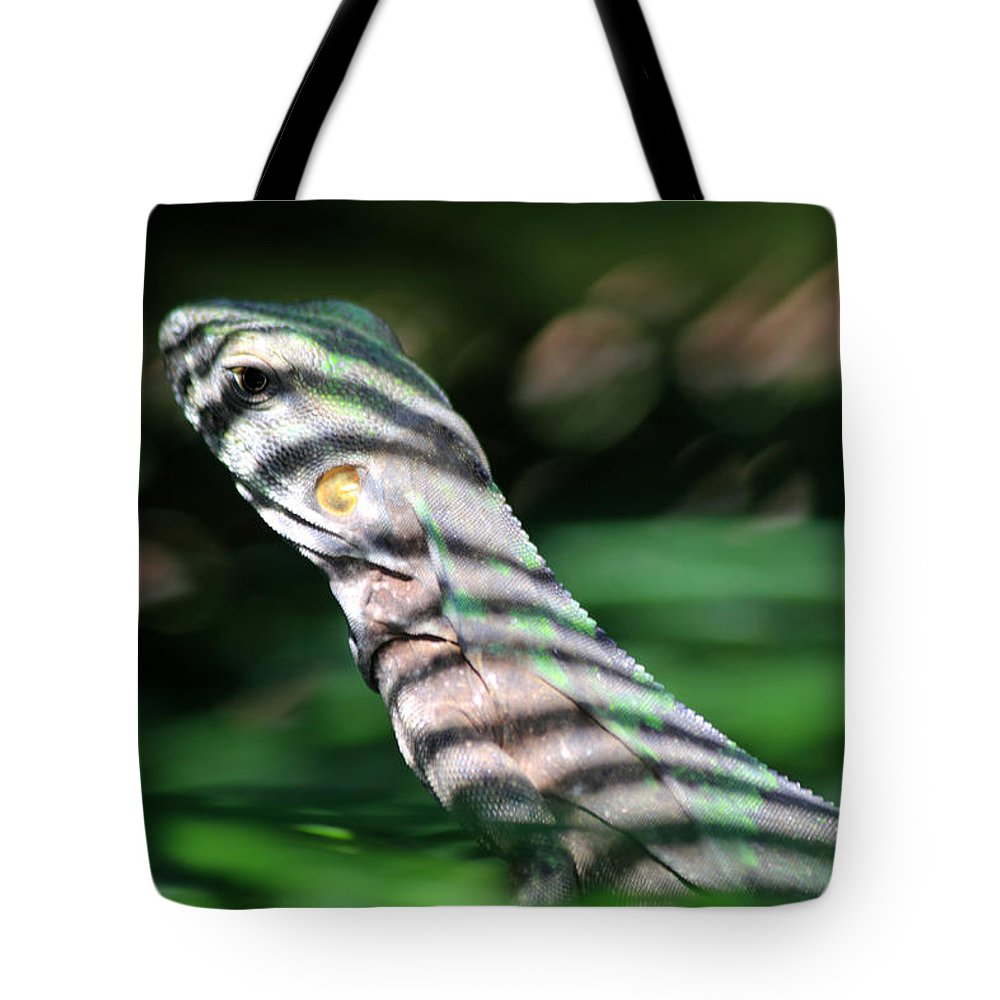 Iguana Tote Bag featuring the photograph Shadow Stripes by Shane Bechler
