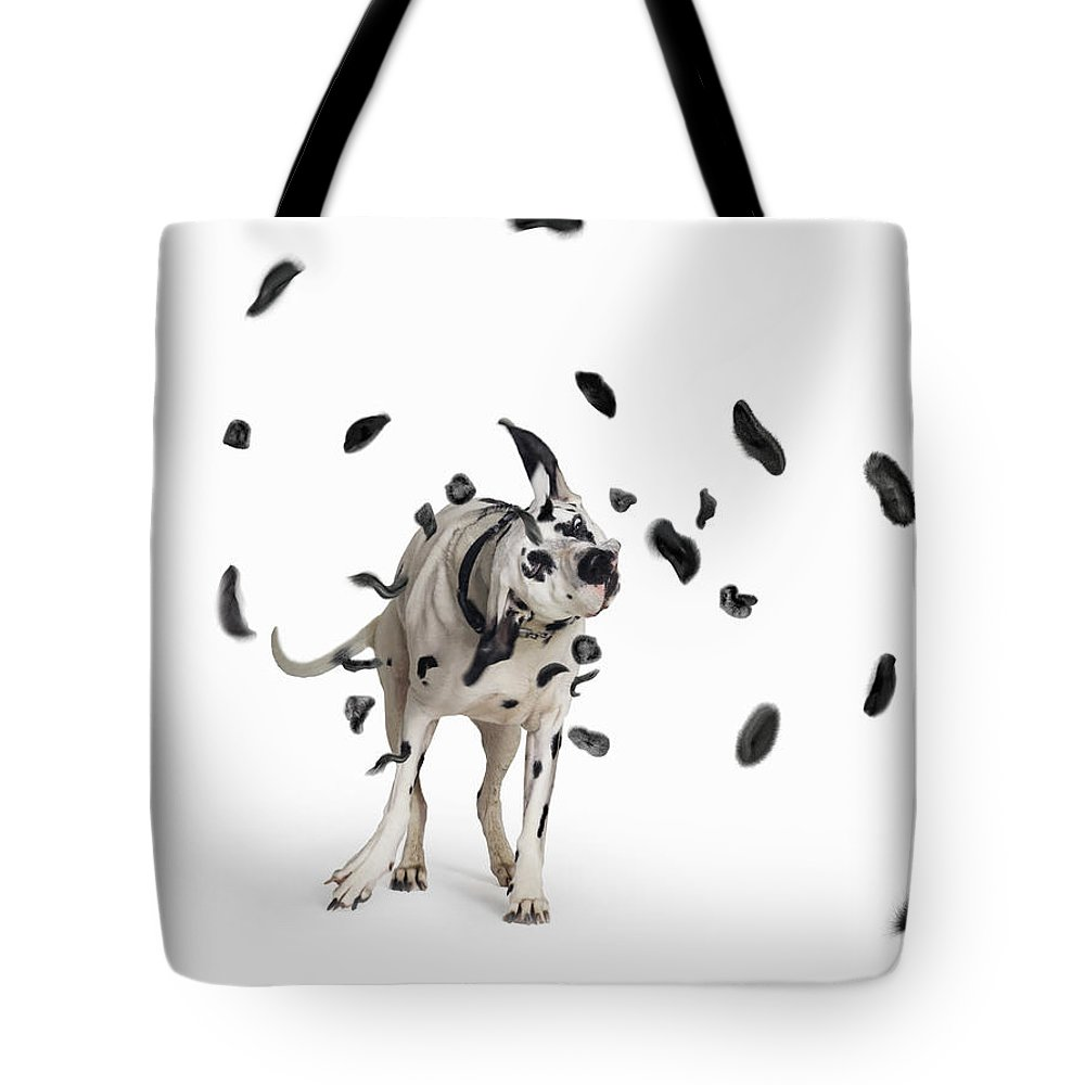 Pets Tote Bag featuring the photograph Shake The Spots Off by Gandee Vasan
