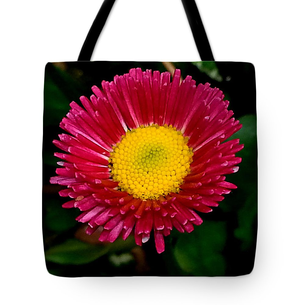 Shall We Dance Tote Bag featuring the photograph Shall We Dance by Jessica Tolemy