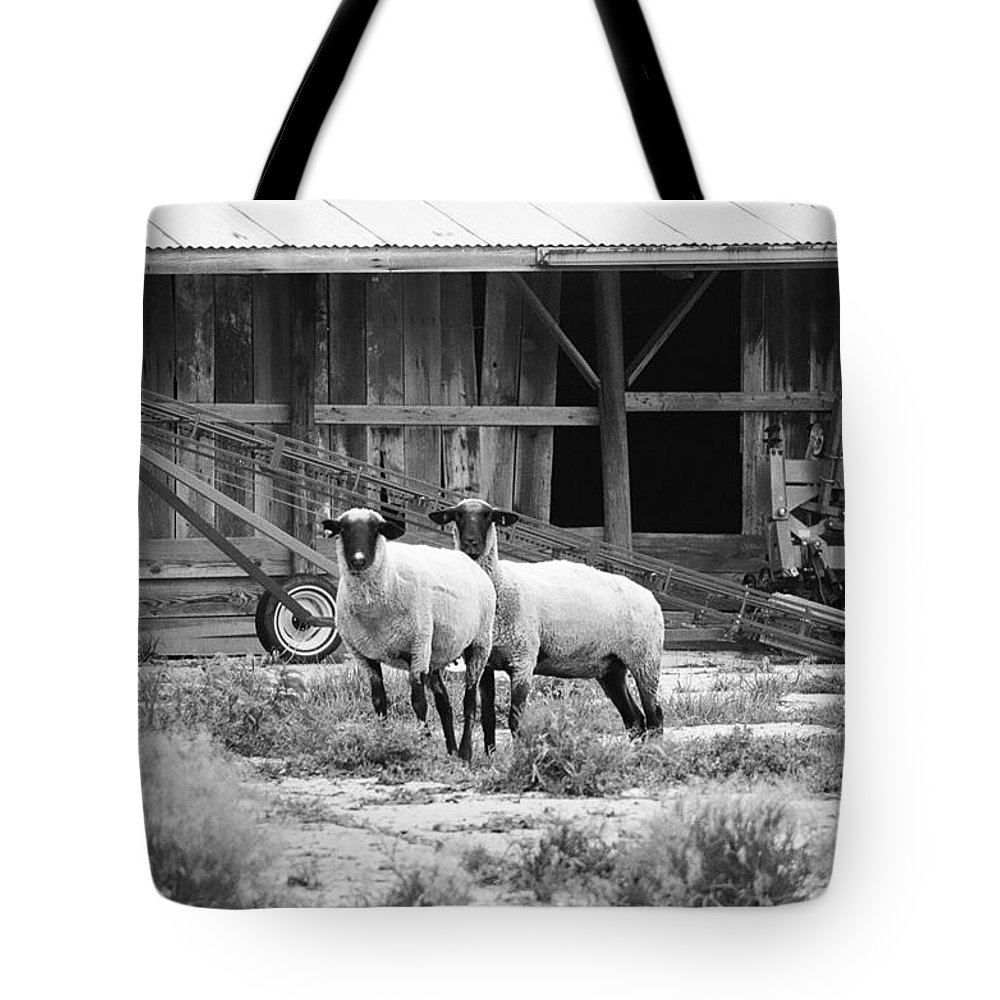 Sheep Tote Bag featuring the photograph Sheep by Dan Young