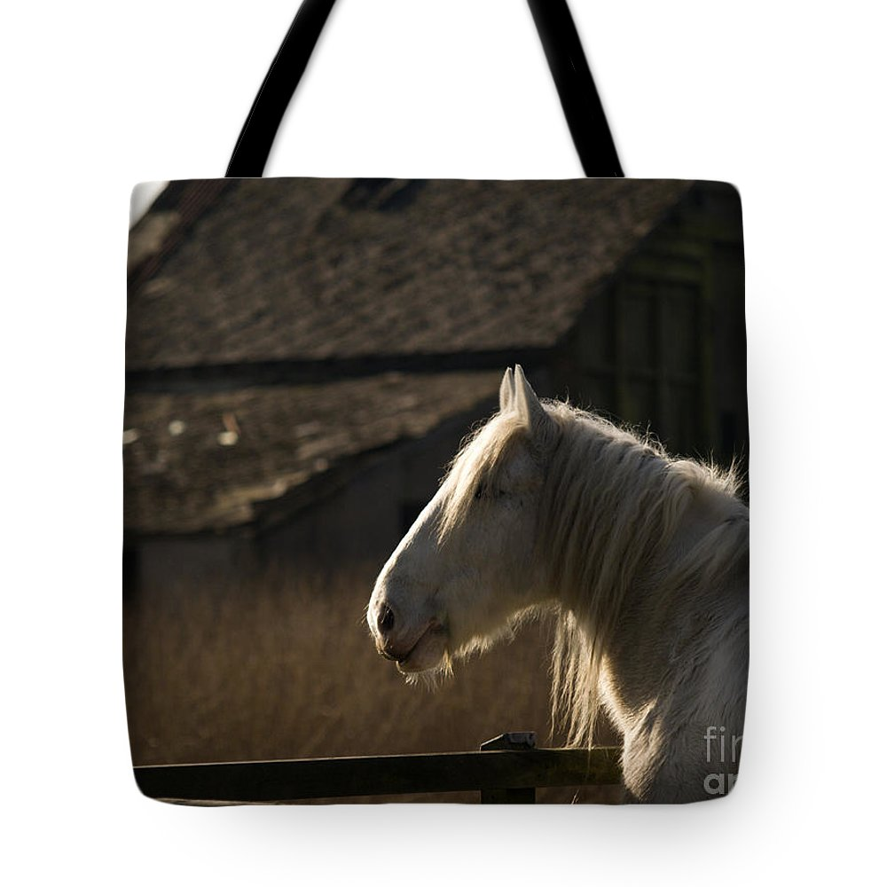 Horse Tote Bag featuring the photograph Shire Horse by Angel Ciesniarska