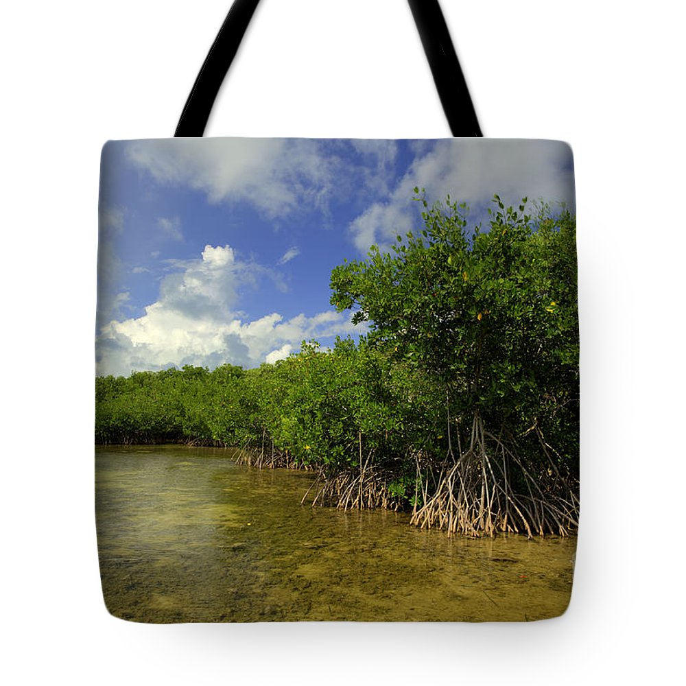 Vacation Tote Bag featuring the photograph Shoreline by Bruce Bain