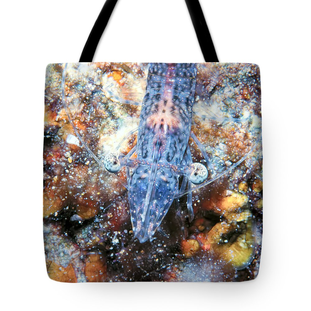 Micronesia Tote Bag featuring the photograph Shrimp 32 by Dawn Eshelman