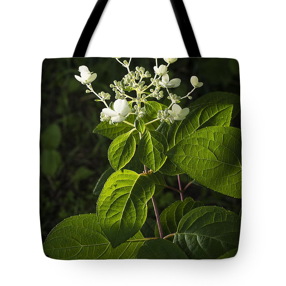 Plant Tote Bag featuring the photograph Shrub With White Blossoms by Donald Erickson