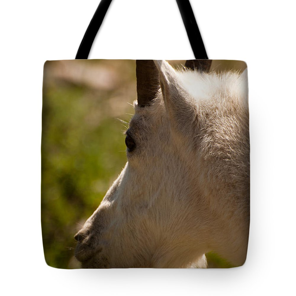 Glacier Tote Bag featuring the photograph Shy by Bruce Gourley