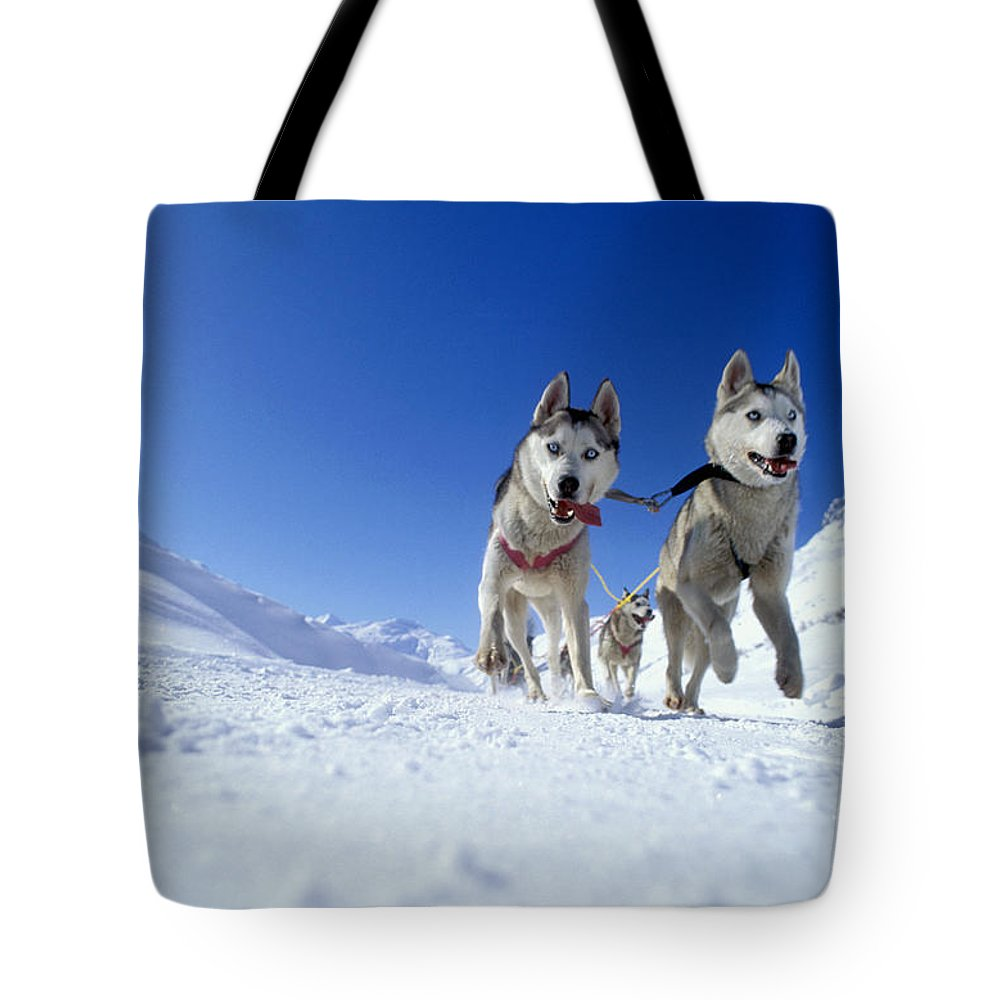 Dog Tote Bag featuring the photograph Siberian Husky Dogs by Rolf Kopfle