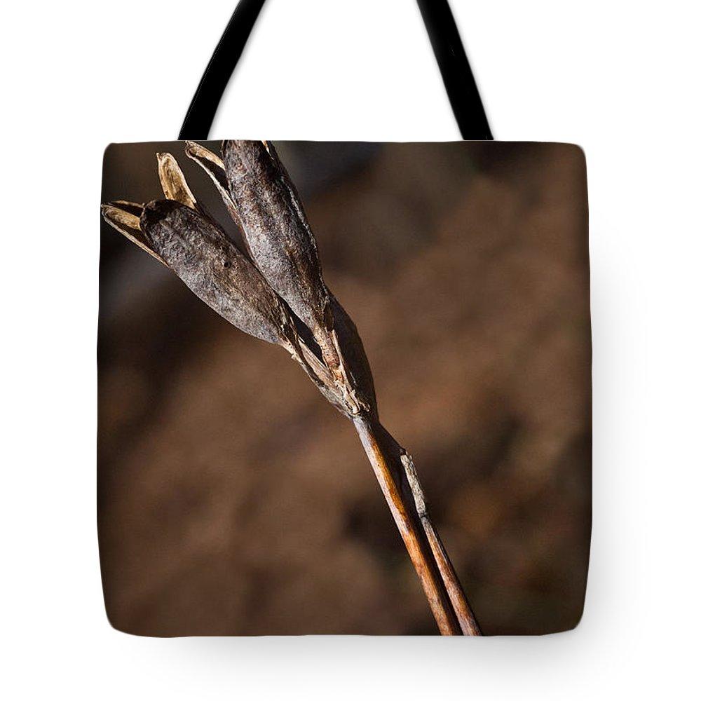 Siberian Tote Bag featuring the photograph Siberian Iris Seed Pod 1 by Douglas Barnett