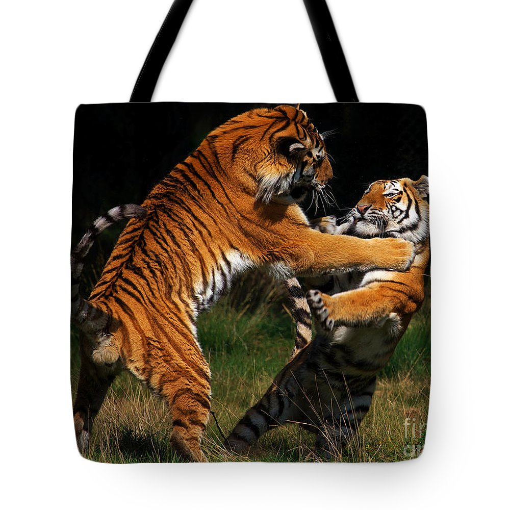 Two Tote Bag featuring the photograph Siberian Tigers In Fight by Nick Biemans