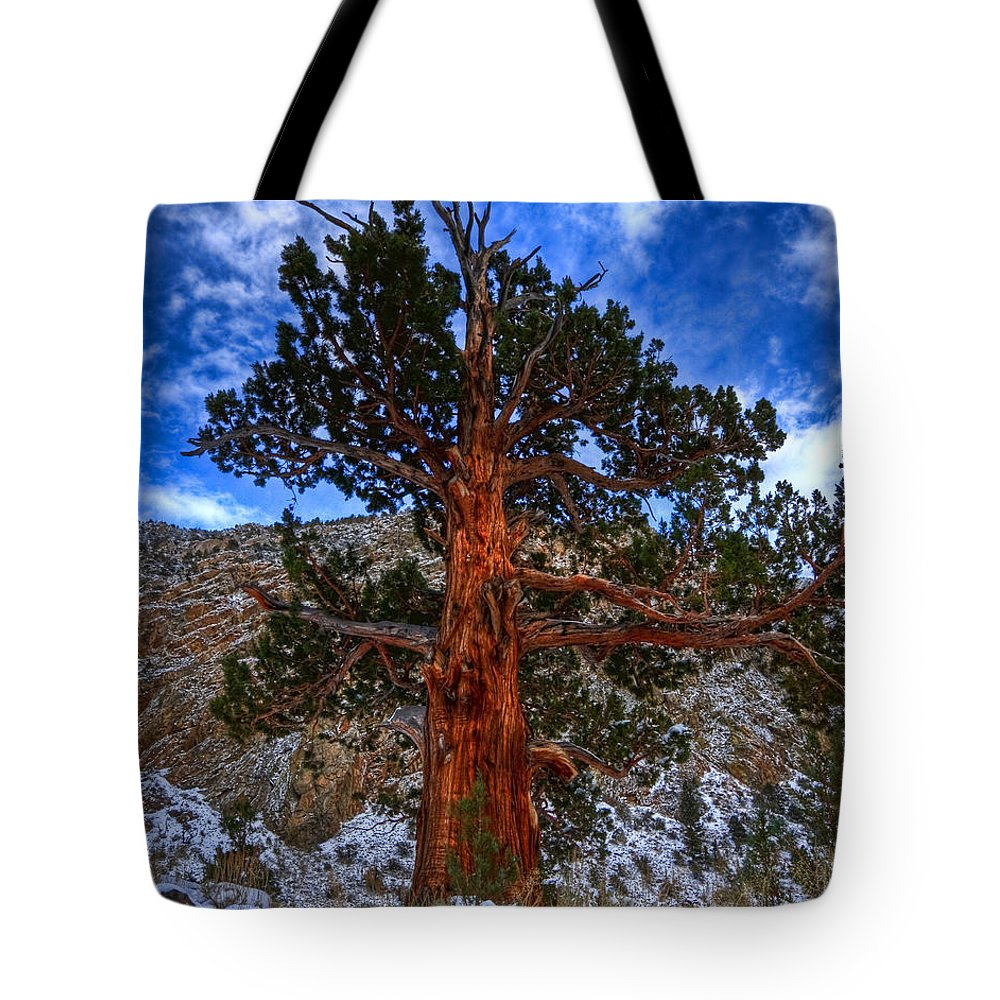 Pine Tote Bag featuring the photograph Sierra Pine by Beth Sargent