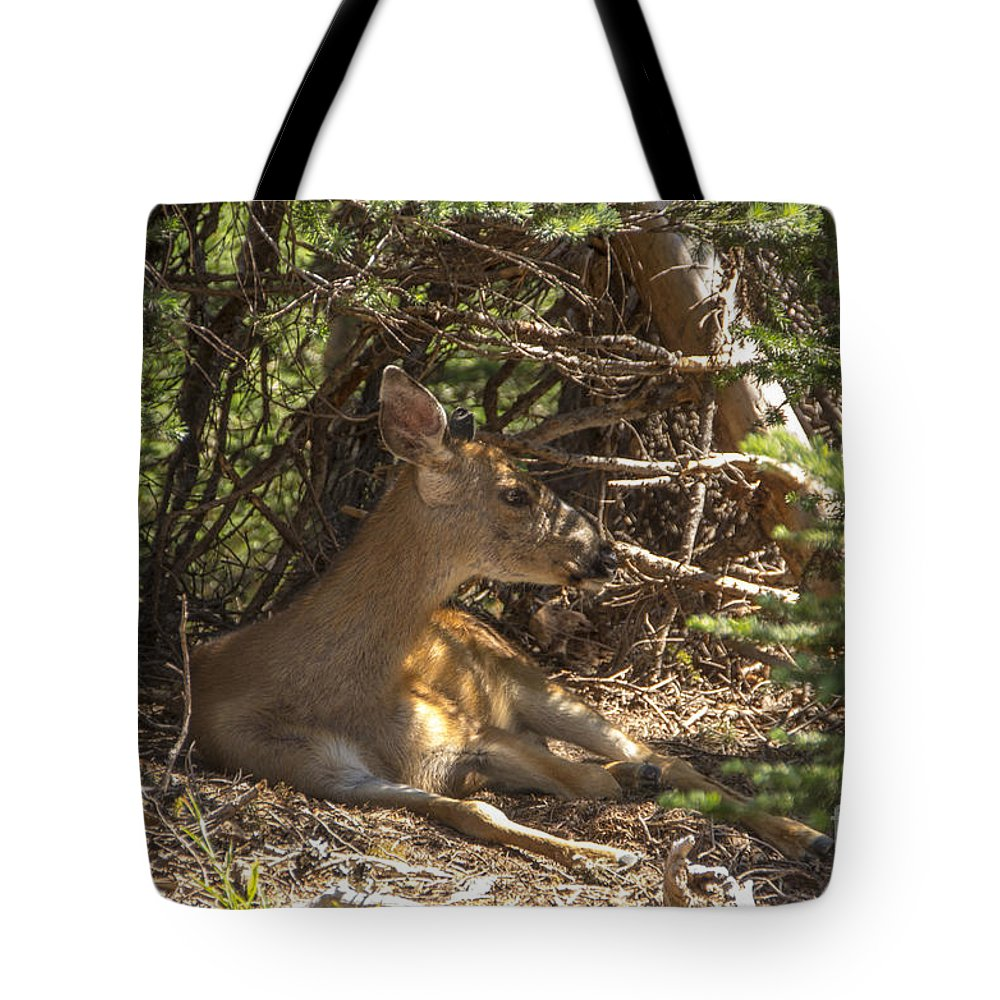 Doe Tote Bag featuring the photograph Siesta by Louise Magno