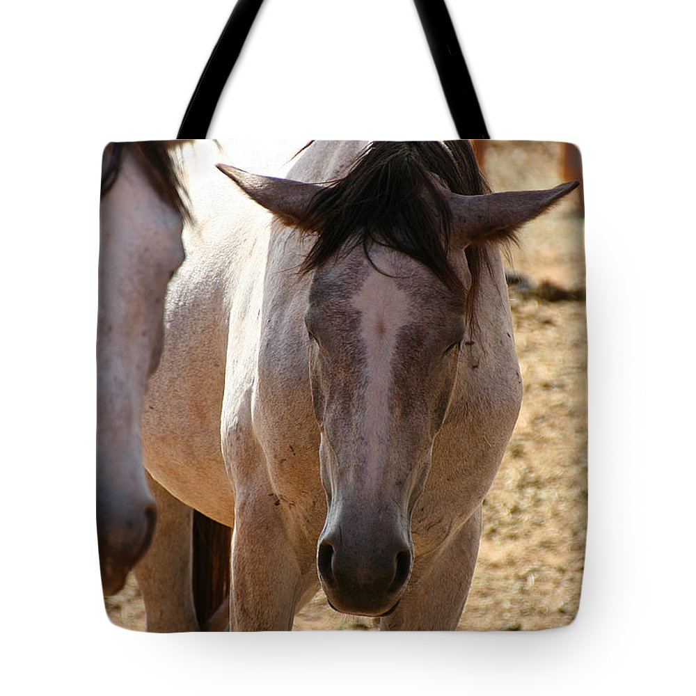 Horses Tote Bag featuring the photograph Siesta by Susan Herber