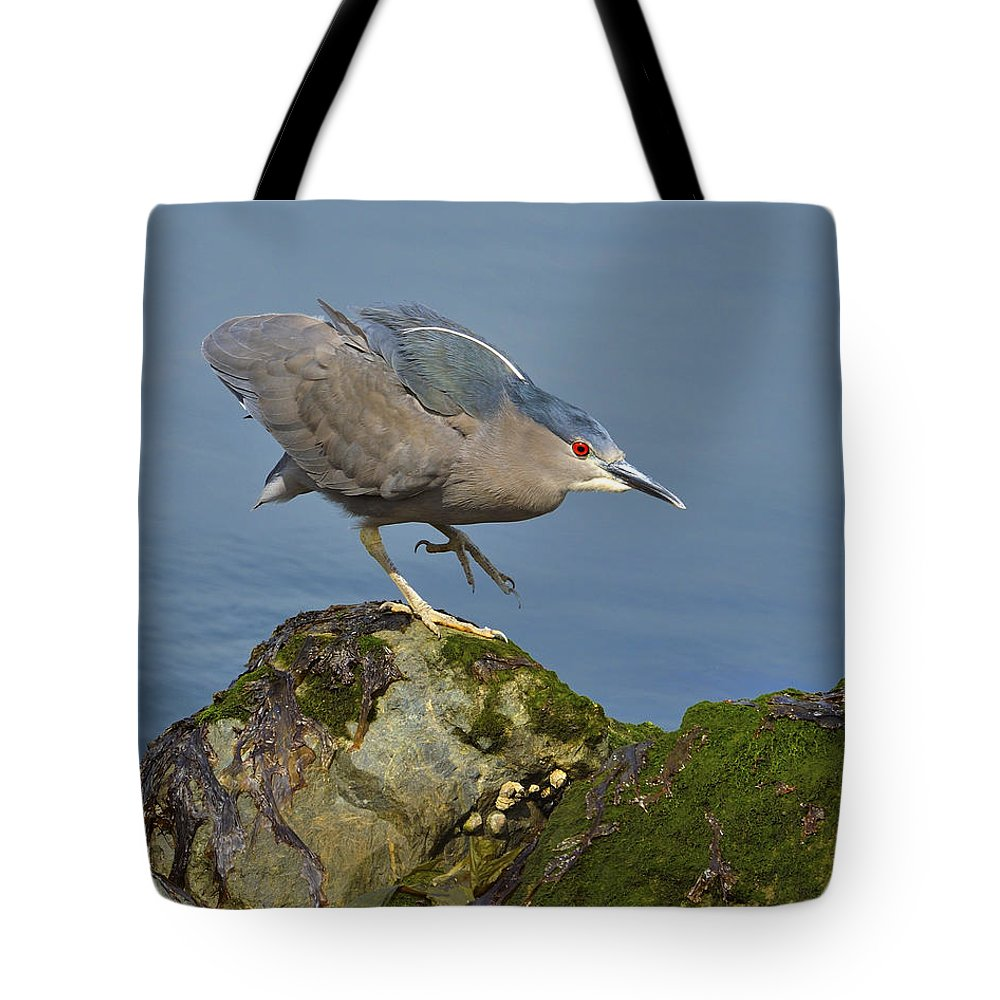 Black-crowned Night Heron Tote Bag featuring the photograph Silent Steps by Tony Beck