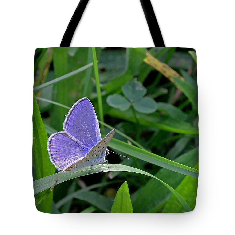 Silver Studded Blue Butterfly Tote Bag featuring the photograph Silver Studded Blue Butterfly by Tony Murtagh