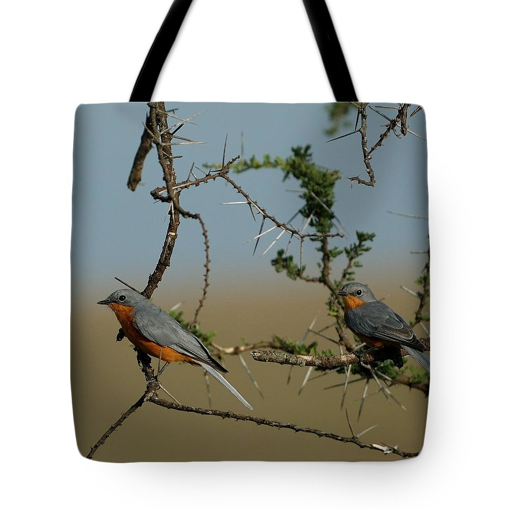 Silverbird Tote Bag featuring the photograph Silverbirds by Ian Ashbaugh