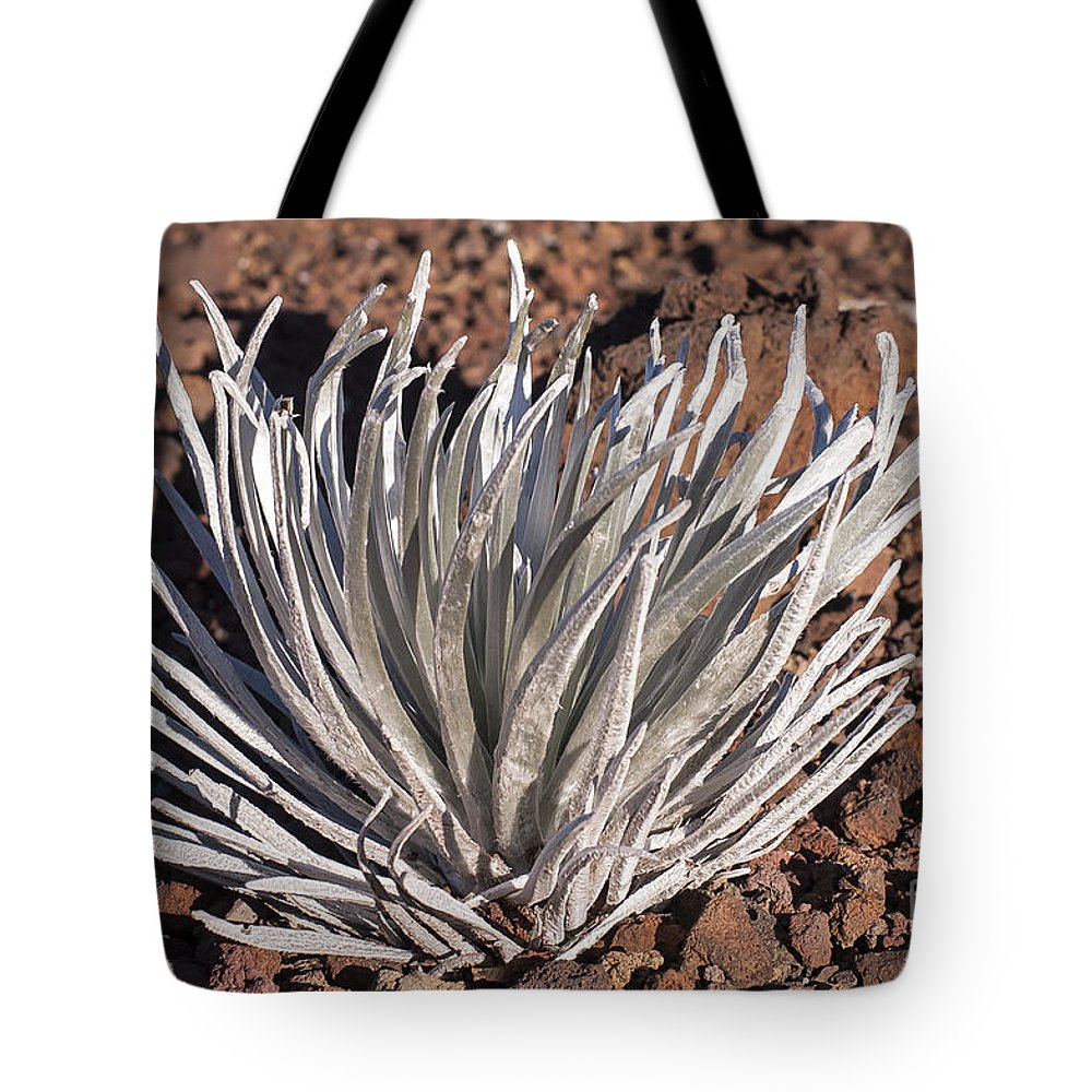 Silversword Plant Plants Leaf Leaves Volcanic Rock Rocks Haleakala National Park Volcano Area Maui Hawaii Parks Nature Greensward Succulent Succulents Tote Bag featuring the photograph Silversword Leaves by Bob Phillips