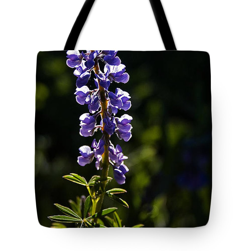 Lupinus Argenteus Tote Bag featuring the photograph Silvery Lupine  #2 by J L Woody Wooden
