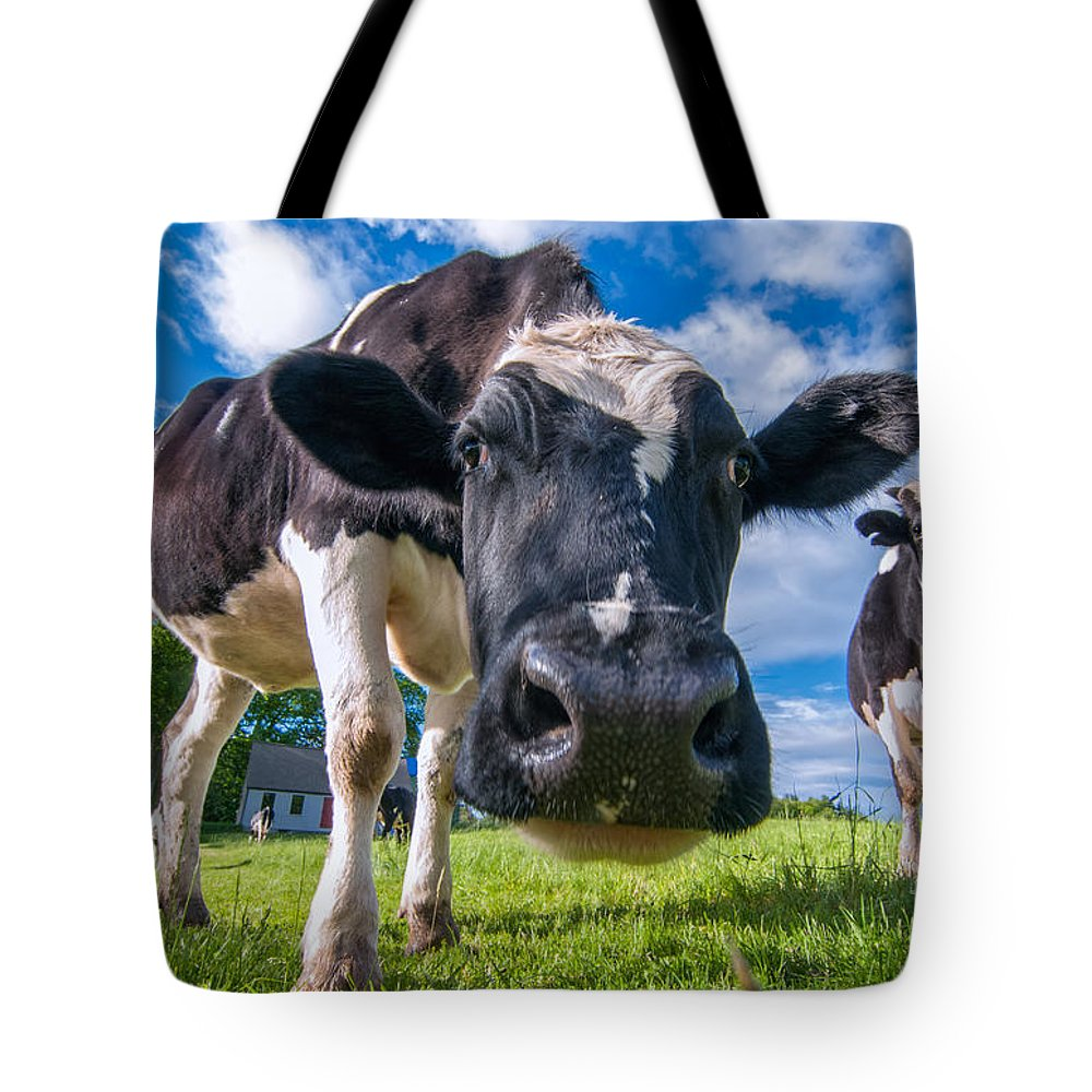 Tote Bag featuring the photograph Simply Cows by Scott Thorp
