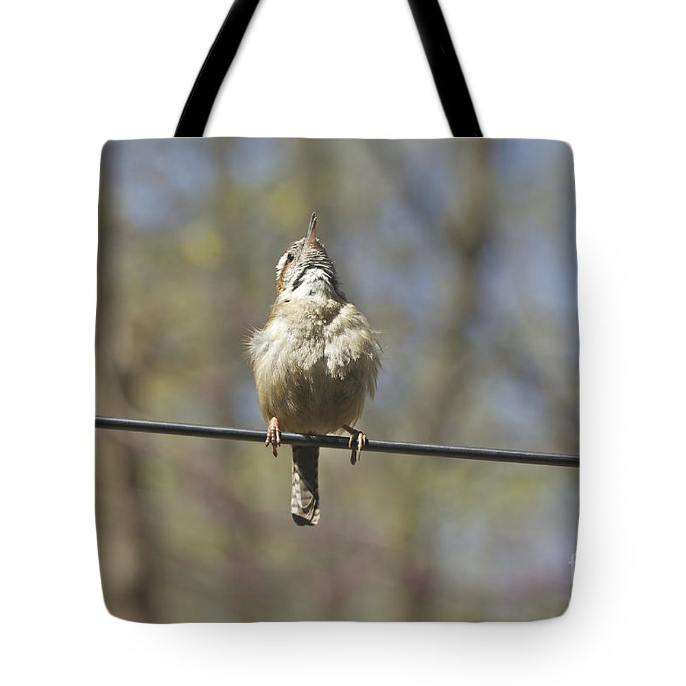 Carolina Wren Tote Bag featuring the photograph Singing His Heart Out - Carolina Wren - Thryothorus Ludovicianus by Mother Nature