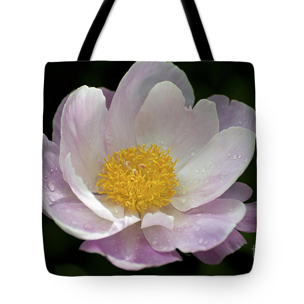 Peonie Tote Bag featuring the photograph Single Peonie 8444 by Terri Winkler