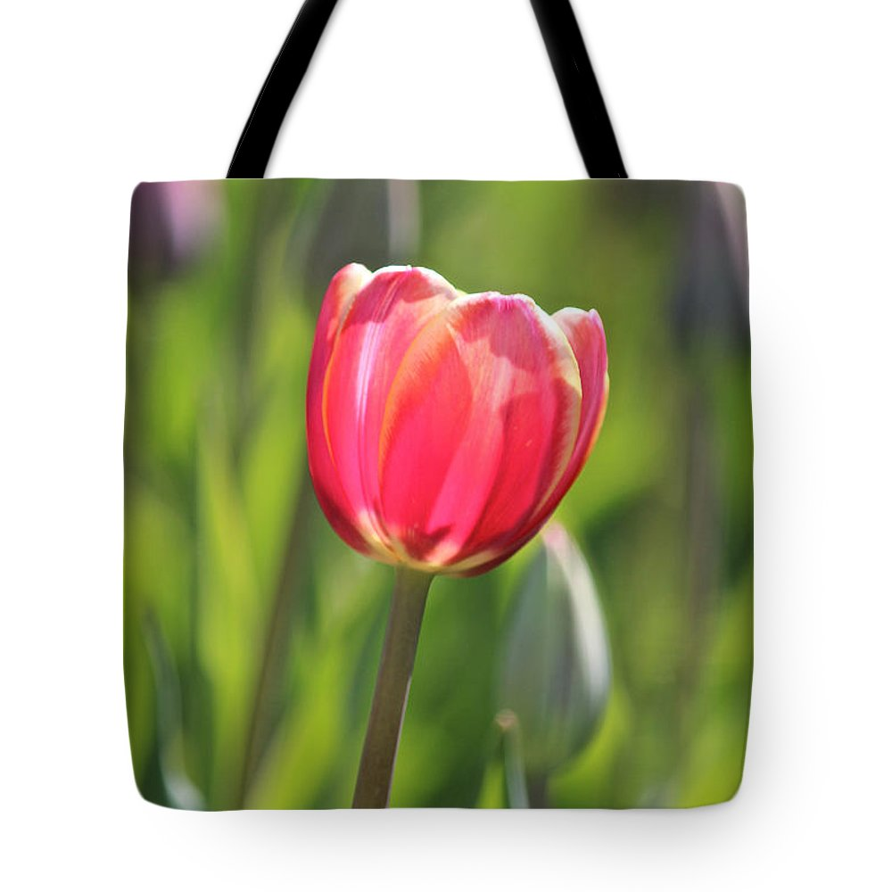 Boston Tote Bag featuring the photograph Single Tulip by Beverly Tabet