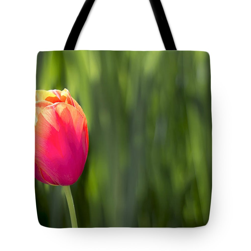 Single Tote Bag featuring the photograph Single Tulip Flower On Green Background by Jit Lim