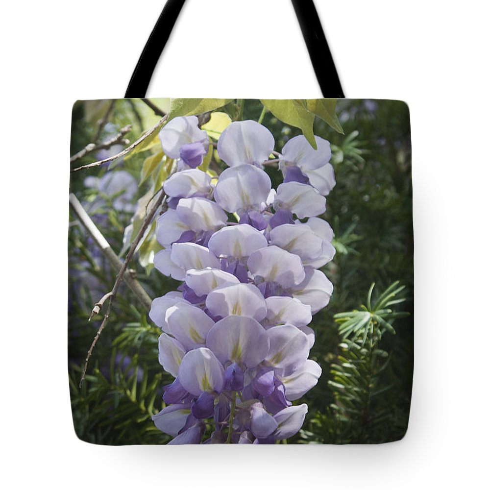 Wisteria Tote Bag featuring the photograph Single Wisteria by Teresa Mucha