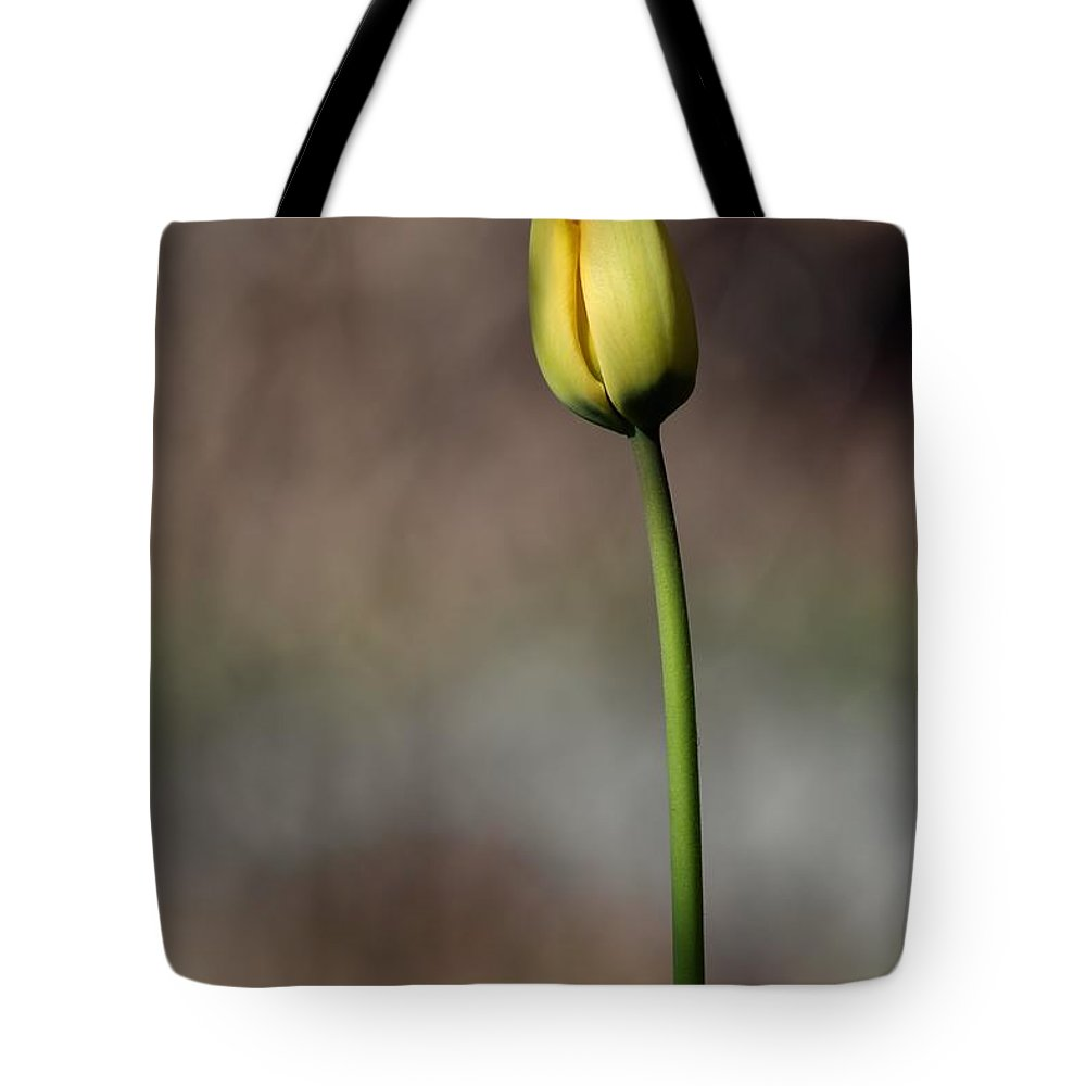 Tulip Tote Bag featuring the photograph Single Yellow Tulip by Kenny Glotfelty