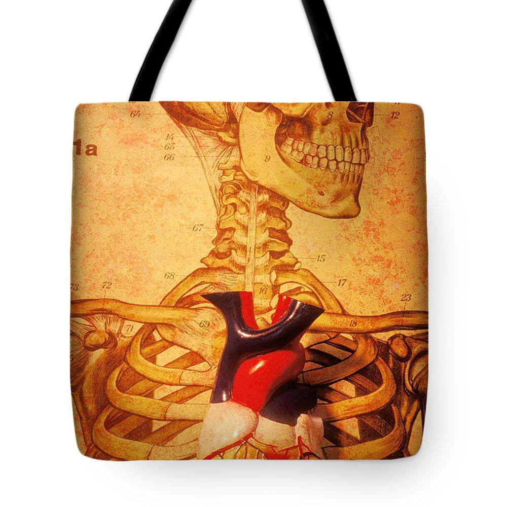 Anatomical Model Tote Bags