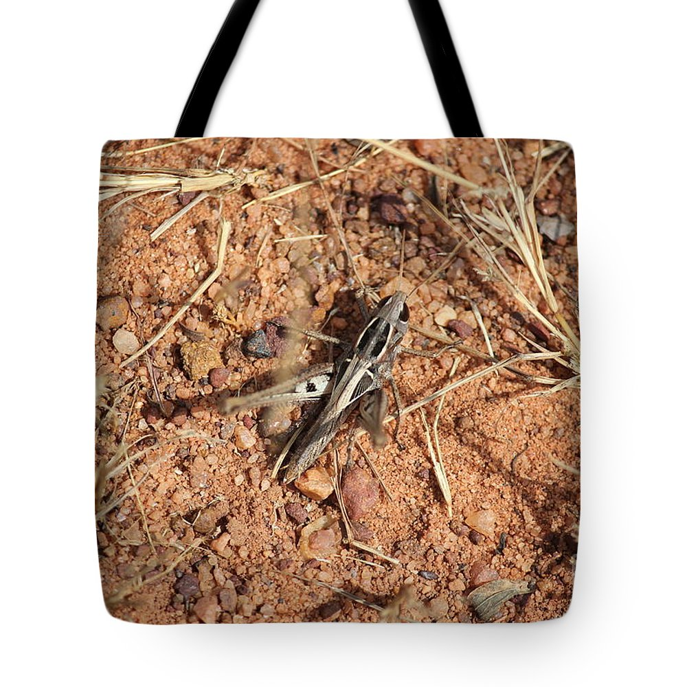 Nature Tote Bag featuring the photograph Skeleton by Four Hands Art