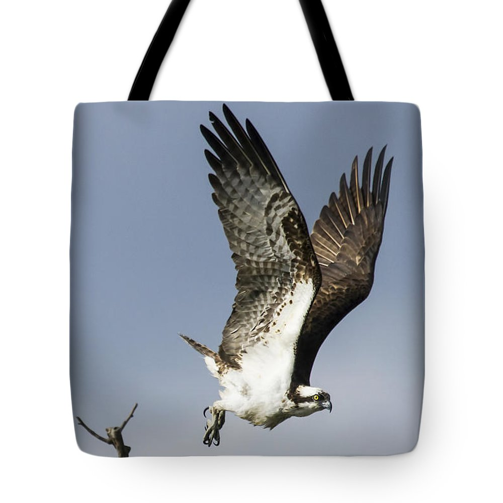 Osprey Tote Bag featuring the photograph Sky Hunter by David Lester