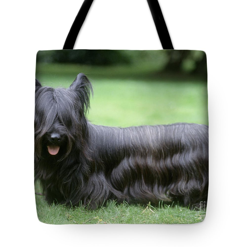 Skye Terrier Tote Bag featuring the photograph Skye Terrier Dog by John Daniels