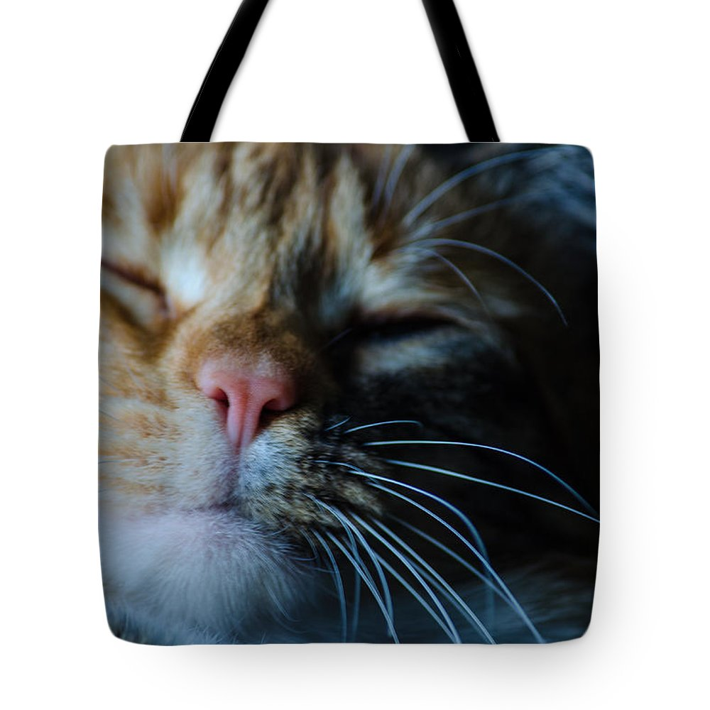 Cat Tote Bag featuring the photograph Sleeping Abby by Tikvah's Hope
