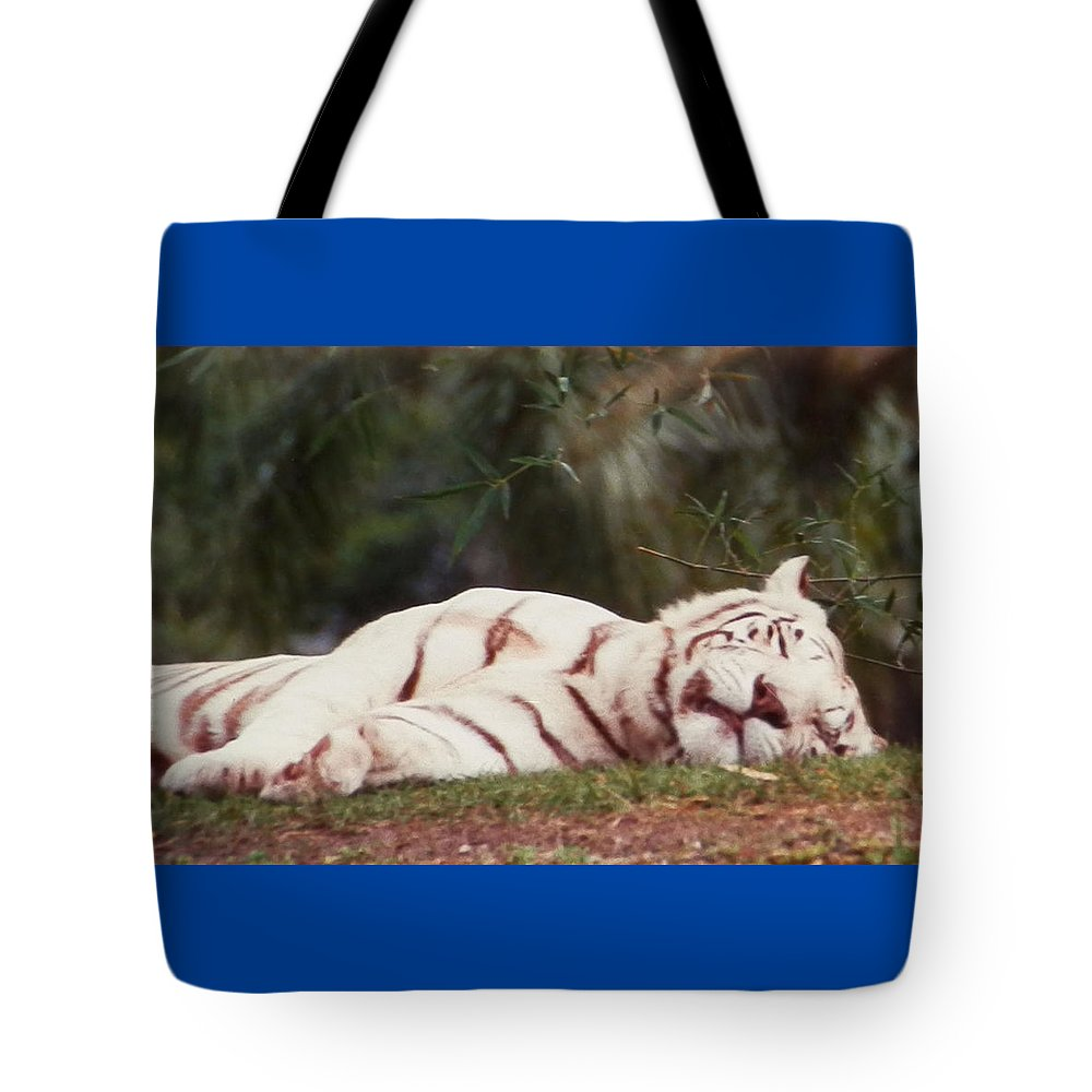 Beautiful White Tote Bag featuring the photograph Sleeping White Snow Tiger by Belinda Lee