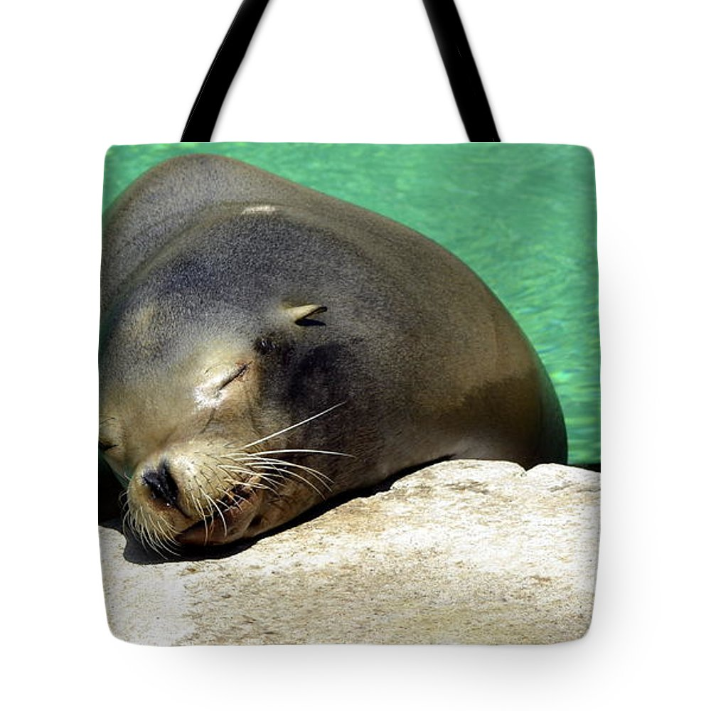 Seal Tote Bag featuring the photograph Sleepy Seal by Kathy Barney