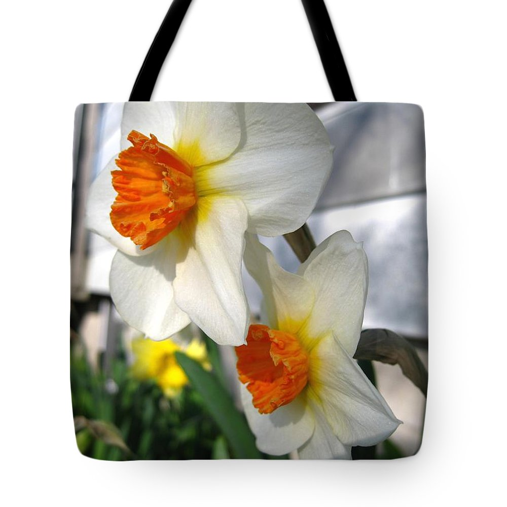 Mccombie Tote Bag featuring the photograph Small-cupped Daffodil Named Barrett Browning by J McCombie