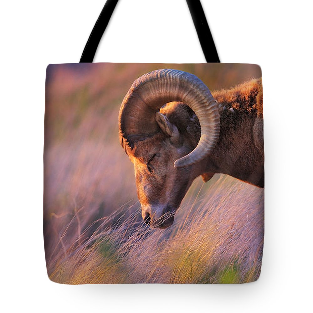 Sheep Tote Bag featuring the photograph Smell The Wind by Kadek Susanto