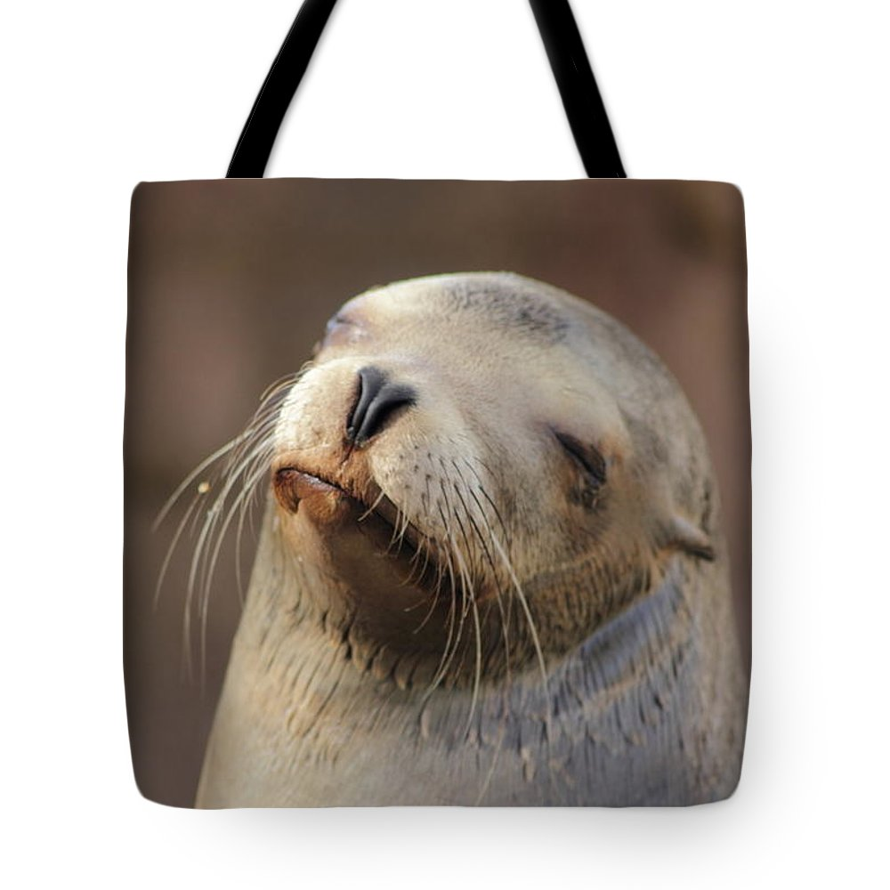 Sea Lion Tote Bag featuring the photograph Smug Sea Lion by Richard Cheski